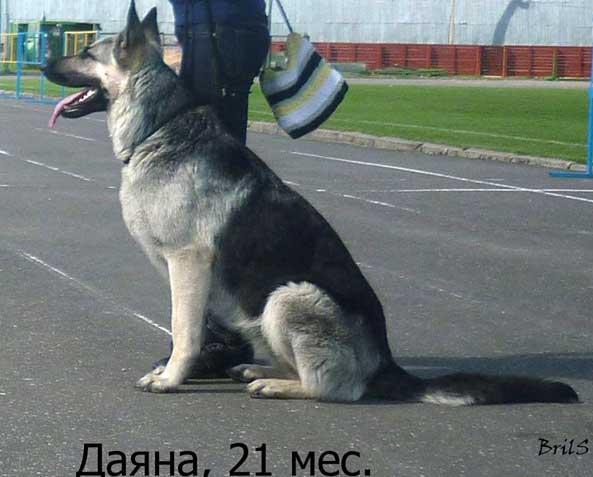 МОЯ УЧЕНИЦА ДАЯНА (ДЗЕРЖИНСК, 2012)