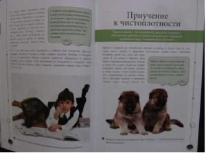 кинолог Андрей Шкляев - книга о немецкой овчарке