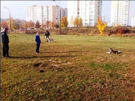 Отработка команды «Лежать» с выдержкой на расстоянии (мои ученики Анна, Хани и я на тренировке. Минск)