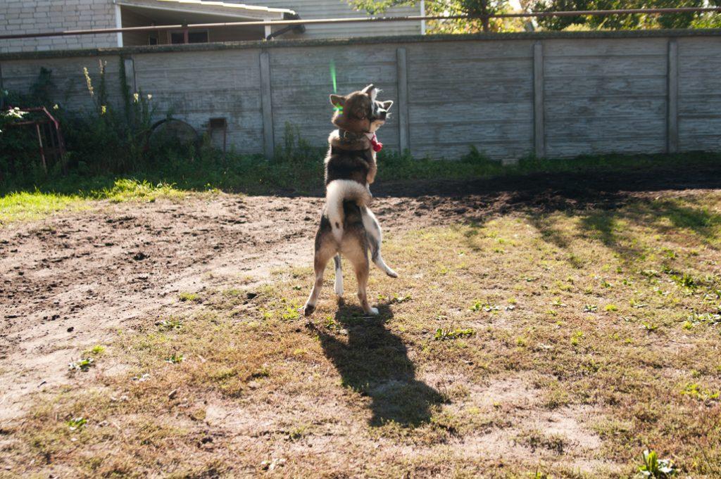 дрессировка собак минск